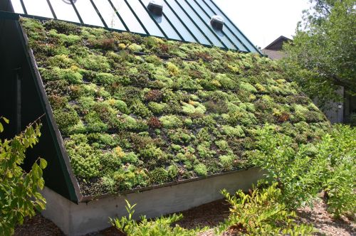 Green roof renovation