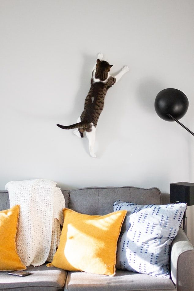 cat on the wall_RenoQuotes